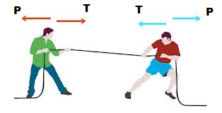 Types of Forces - Weight, Normal, Tension, Friction, and
